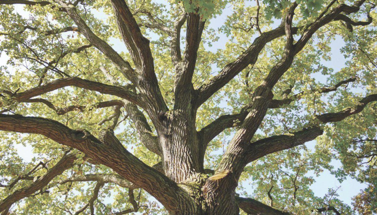 timber experts artichoke